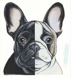 Sketchbook page of a French Bulldog by Jeroen Teunen, The Dog Painter. For Custom Dog Portraits visit:www. French Bulldog Tattoo, French Bulldog Art, French Bulldogs, Custom Dog Portraits, Pet Portraits, Best Pet Dogs, Dog Pop Art, Boston Terrier Dog, Bulldog Puppies