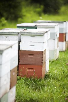 Marketing honey in today's market is going to pose a bit of a challenge since you have so many commercial level sellers doing this with the resources to North Carolina Attractions, Raising Bees, Herb Farm, Save The Bees, Flower Farm, Bees Knees, Garden Ornaments, Family Traditions, Queen Bees