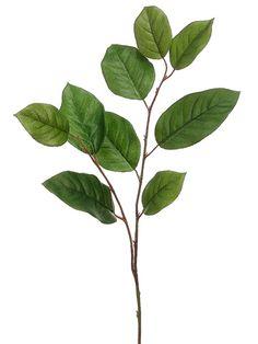 mass foliage 2 ( salal)