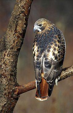 Sueños compartidos : Aves