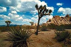 Joshua Tree. Been there.  Very cool place.