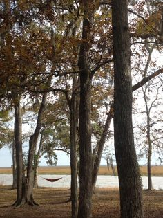 Honey Creek, near Jekyll Island, Georgia~ Honey Creek an Episcopal Retreat that is place for conferences and camps. I have found it to be a place for quiet reflection and rest.