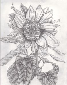 Flowers For > Sunflower Drawing Images Sunflower Sketches, Sunflower Drawing, Sunflower Art, Pencil Art Drawings, Drawing Sketches, Flower Drawings, Sketching, Plant Drawing, Painting & Drawing