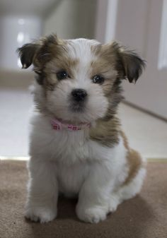 awwww-cute:She's growing so quickly