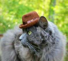Fedora Cat Hat for anyone silly enough to try.