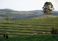 Vista rural
