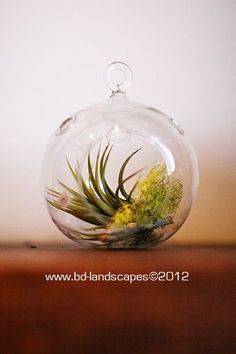Tillandsia in a glass orb with treasures from a hike.
