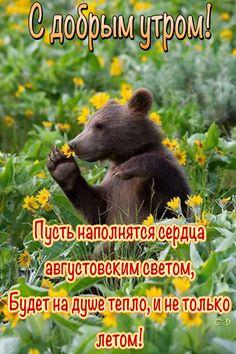 Black Bear, Brown Bear, Animals, American Black Bear