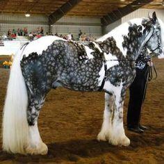 horseyyy(: