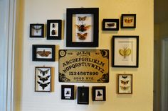 Blog - insect taxidermy vignette home decor and ouija board