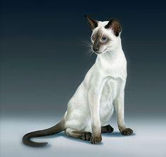 Siamese cat illustrations by Vladymyr Lukash, via Behance