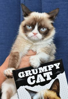 Grumpy Cat on Friday #GrumpyCat #Photos Just click on the image to see Grumpy Cat smile