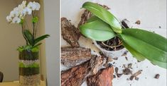 Orhideea este o floare cu adevărat încântătoare! Multe femei au apreciat-o deja la justa valoare și o cresc acasă în ghivece. În plus, au început să creeze compoziții, combinând floarea preferată cu suculente și alte plante. Și vrem să vă spunem că arată uimitor! Am decis să vă împărtășim această ideea minunată de plantare mixtă a orhideelor cu alte plante vecine. Vă prezentăm 10 compoziții pentru inspirație! 1.O astfel de plantare arată ca un buchet deosebit, de la care e imposibil să-ți… Samos, Bird Feeders, Outdoor Decor, Plant, Flowers, Teacup Bird Feeders