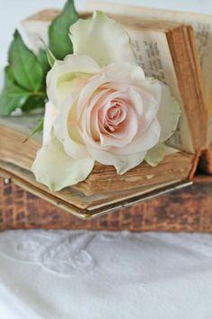Roses <3 <3 <3 <3