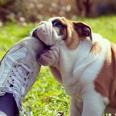 15 Life Lessons You Can Learn From Dogs [STORY]