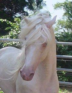 DecoArt24.pl - Albino Horse