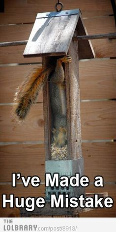 Lol... this is great :-)  I can see this happening at my house with that crazy squirrel getting in the squirrel proof bird feeder.
