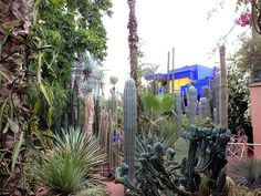 Jardin Majorelle (21 Amazing Things to Do in Marrakesh Morocco).