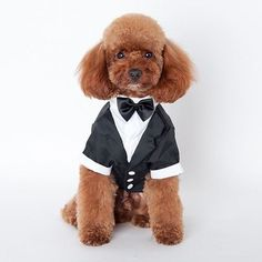 Prince Tuxedo Suit  Description: 100% brand new and high quality material: polyester  Size (CM): S: length 23 chest 33 neck 24 M: length 27 chest 38 neck 26 L: length 30 chest 44 neck 30 XL: length 35 chest 52 neck 36 XXL: length 41 chest 59 neck 38  Order via WhatsApp 087896532077 & LINE @wec7207p (pake @) #puppies #onlinepetshop #petshop #makanananjing #puppy #sofa #pawbulous #petshopindo #petshopjambi #petbed #dogfood #indodog #mainananjing #doglover #cute #anjinglucu #hamster #catbed…
