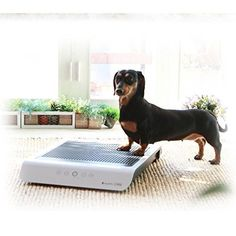 AZISTORY Premium Puppy Pad Automatic Training Pad for Pets Dog Cat * Continue to the product at the image link. (This is an affiliate link) Pet Dogs, Dog Cat, Pets, Puppy Pads, Dog Training Pads, Pet Supplies, Puppies, Image Link, Cubs