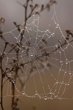 a hate spiders and their webs, but I do think this is a cool picture
