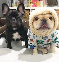 French Bulldogs ❤️ #Buldog