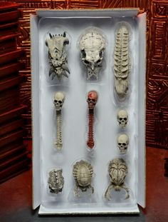 Predator Limited Edition Trophy Skull Pack Coming From NECA - NECA - Action Figures Toys News ToyNewsI.com