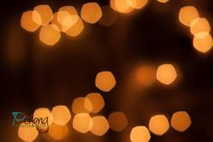 Day 21 - Bokeh Blast Canon 500d, Canon 50mm f/1.8 2/13/2013  #project365 #photography  http://pchengphotography.blogspot.com/2013/02/project-365-week-3.html