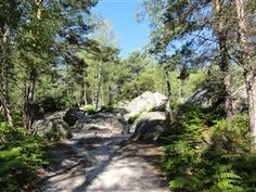 Barbizon : petite promenade dans la forêt de Fontainebleau