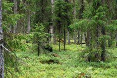 1)Virtuaalimetsä 2) Virtuaalinen metsäkoulu Pirkanmaa http://www.pirkanmaanmetsat.fi/metsakoulu/