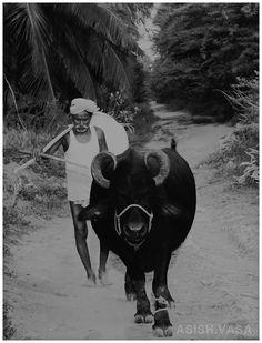 Top Photo Affection of Iconada Contentpreneurs Internship, Indian Farmer by Asish Vasa, http://500px.com/asish1