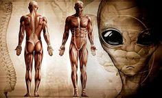 Los teóricos de los Antiguos Astronautas han propuesto la extrema posibilidad de que una especie...