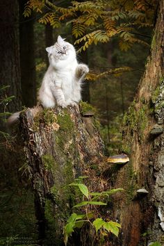 Cat in the forest -
