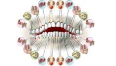Каждый зуб связан с органом в вашем теле. Зубные повреждения предсказывают проблемы органов