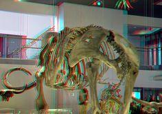 mammoth Naturalis Leiden 3D