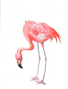 Flamingo Original watercolor painting 12 X 9 in by ORIGINALONLY, $29.00
