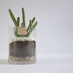 The newest member of our potted botanical range.