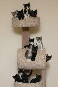 Kitty tree...