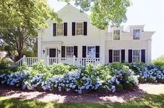 Historic house with lilacs.