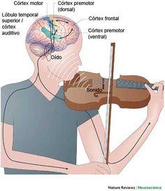 Música & cerebro