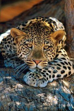 I love Leopard Print..
