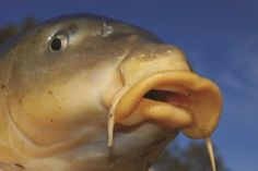 Carp fishing legend Jason Hayward pulls no punches in this intriguing look at his angling. The rare film includes some beautiful pictures and the amazing story of the Black Mirror.   #carp #Carp fishing secrets #carp fishing tips #catch carp