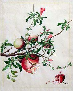 Pomegranates. 18th century. Chinese