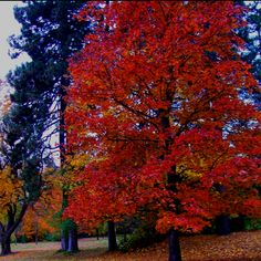 Finch Arboretum, Spokane #spokane Find out more at: http://www.lilaccityrealestate.com