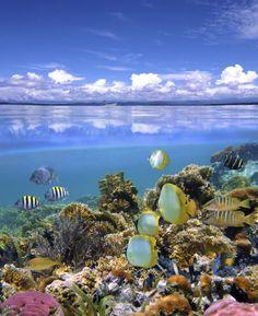 Coral Reef & Sky