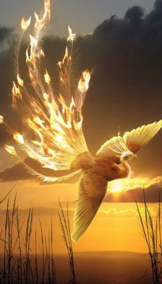 Ideas For Phoenix Bird Firebird Dragon Fire Bird, Fantasy, Photo, Mythical Creatures, Phoenix Bird, Phoenix Art, Art, Phoenix Artwork, Phoenix Dragon