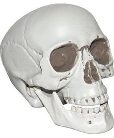 Skull With Movable Lower Jaw - CostumePub.com Halloween Costume Shop, Halloween Skeletons, Halloween Costumes For Kids, Halloween Themes, Halloween Decorations, Decoration Party, Scary Halloween, Halloween Wall Decor, Spooky Decor