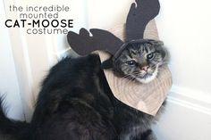 The Incredible Mounted Cat-Moose Costume DIY eat.sleep.MAKE. #MichaelsMakers