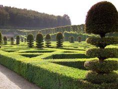 Monty don French gardens part 2 Topiary Garden, Lush Garden, Garden Art, Garden Design, Garden Ideas, Monty Don Longmeadow, Landscape Architecture, Landscape Design, Italian Garden