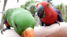 Google Image Result for http://resources1.news.com.au/images/2012/03/26/1226310/610421-parrots.jpg